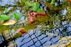 Life in a pond (Annette LeDuff) Tags: reflection nature water pond flora goldfish mosca favorited matthaeibotanicalgardens beautifulearth annarbormi supershot mywinners aquaticworld wonderfulwater flickrdiamond heartawards photossansfrontières flickrsexquisiteshots flickrovertheshot daysoutandabout surfacesoberflaechen lovelyuniverse magicmomentsinyourlifelevel1 06162012