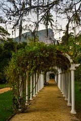 DSC_5429 (sergeysemendyaev) Tags: 2016 rio riodejaneiro brazil jardimbotanico botanicgarden     outdoor nature plants    green arc   beauty nikon