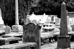 Ghoul Gate (Gazasal) Tags: me graveyard st was book scotland watching neil historic peters tombstones something kirk duffus gaimen amongs gazasal