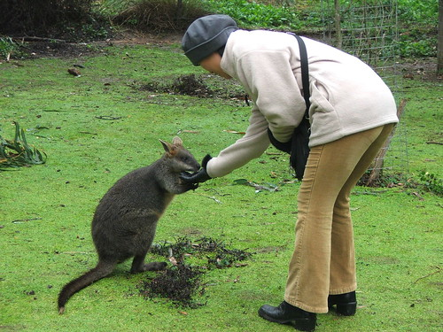 Picture from the Healesville Animal Sanctuary