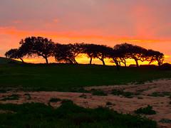 Tramonti di Sardegna (Silvia L Billet) Tags: sardegna pink sunset red tree alberi tramonto desert wind fuego albero vento scogliera mistral maestrale savana