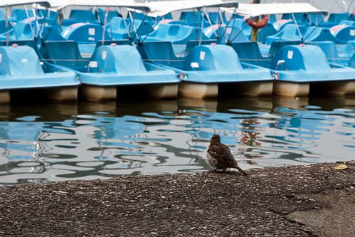Little Bird, Blue Boats