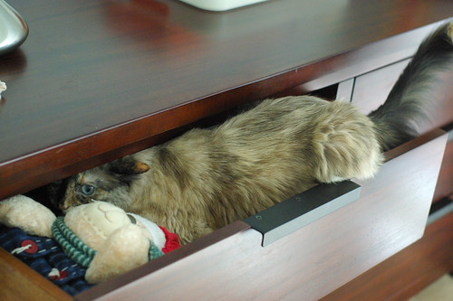 cat in a drawer.
