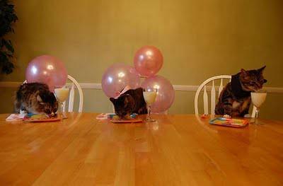 cat_birthday_parties_02