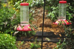 Please call ahead for reservations. (jeffreyw) Tags: nectar hummingbirds feeders 4thofjuly hummers reddit newrecord rubythroats
