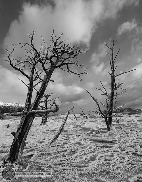 Yellowstone Day 2 52711 © Michael Klayman-022