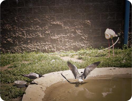 Cape May Zoo 9
