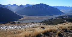 winter blues (go wild - NZ outside) Tags: new zealand nz mountain peak canterbury doc conservation