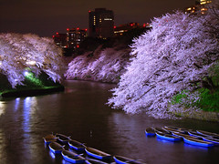 Chidorigafuchi (Kosei.S) Tags: light up japan night cherry tokyo nikon blossoms palace imperial d200 chidorigafuchi