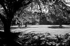 At the park (Deb Jones1) Tags: park travel trees light bw nature beauty canon garden landscape botanical outdoors flora shadows australia places brunswickheads flickrduel debjones1