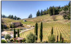 Winery on top of the Mountain... (scrapping61) Tags: california vineyard spring legacy losgatos 2012 ols tistheseason swp redgroup rockpaper aboutyou goldengallery davidbrucewinery ana