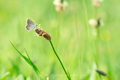 The joy of springtime (João Pedro Soares) Tags: portugal nature natureza insects fafe nikkor105mm macromundo nikkor105mmf28gvrmicro nikond7000 jp3soares joãopedrosoares