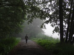 misty morning... (JoannaRB2009) Tags: morning trees mist green nature misty fog river spring alley path foggy poland polska mysterious avenue lowersilesia dolnylsk milicz barycz mysteriousforest nowyzamek dolinabaryczy stawymilickie miliczponds sonydschx100v riverbaryczvalley
