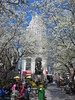 Herald Square Park in New York City blooming with Pyrus calleryana white spring flowering Callery pear blossom trees