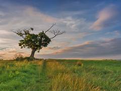 Long summer evening (Alan10eden) Tags: blue ireland summer sky tree field canon evening raw dusk sigma lone northernireland laneway colourful 1770 ulster greengrass markethill countyarmagh 70d leadin alanhopps