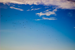Blue (Matiur Rahman Minar) Tags: blue sky cloud minar minar09 coxsbazar khurushkul birds