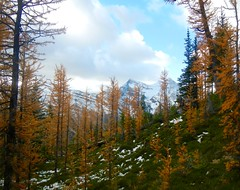 Mount St Piran Larch Viewing and Summit Hike - Dots of blue sky (benlarhome) Tags: alberta canada lakelouise banff