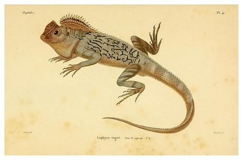 007-Erpétologie générale ou Histoire naturelle complète des reptiles 1834