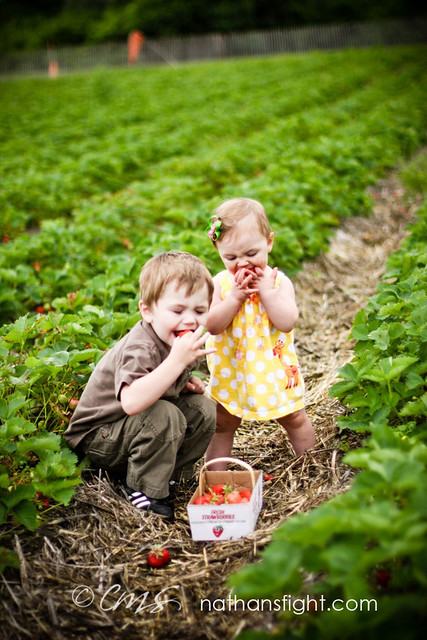 strawberry picking 2011 -_-13