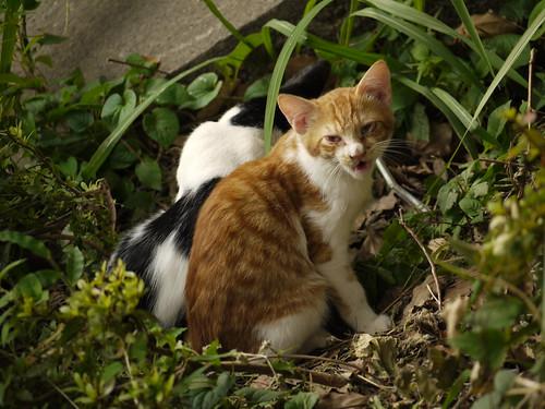 猫@横浜市