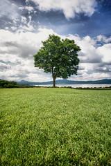 [フリー画像] 自然・風景, 樹木, 草原, メキシコ, 201106241900