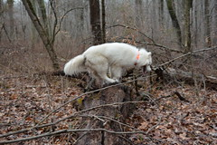 """Chase Is Gonna Climb The Log 4 • <a style=""""font-size:0.8em;"""" href=""""http://www.flickr.com/photos/96196263@N07/14015915747/"""" target=""""_blank"""">View on Flickr</a>"""