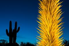 Chihuli - Yellow Icicle and Saguaros (fenicephoto) Tags: desertbotanicalgardenphoenix ruby5 chihouli20132014