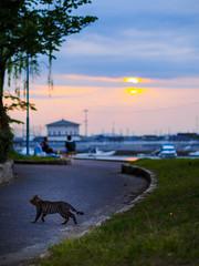 PhoTones Works #5084 (TAKUMA KIMURA) Tags: nature animal cat landscape scenery     kimura em1  takuma   photones