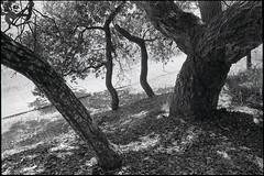 Santa Cruz (westkauai) Tags: california blackandwhite bw santacruz trix nikonf 28mmlens viewedfromthestreet nikkorh28cmf35