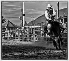 Loggerodeo (sunrisesoup) Tags: bw horse usa cowboy explore fourthofjuly wa rodeo 4thofjuly sedrowoolley loggerodeo 80thanniversary sunrisesoup 20140704