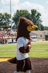 Amuse Yourself. (Angela.Dee) Tags: turf grass green brown bird hawk quincyuniversity quincyil mascot beek canon 6d 24105mml cy365