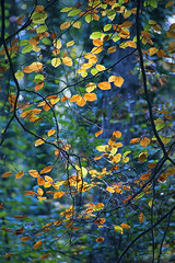 the precious gift of seasonal change - HTT! (lunaryuna) Tags: forest trees newforest england season seasonalchange autumn fall leaves colours light beauty lunaryuna nature