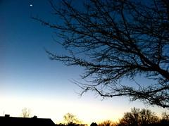 3-7-11 (mkrumm1023) Tags: moon tree silhouette dusk
