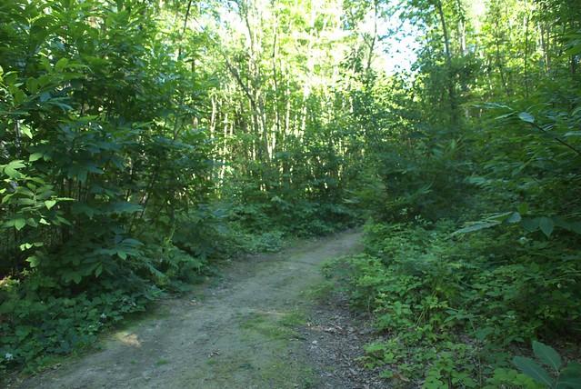 DSC_8147 woodland path