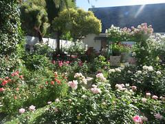 Garden of Ernst Roodt