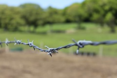 Barbed Wire (Read2me) Tags: game green metal fence grey wire dof bokeh winner thumbs 11e x2 twothumbsup bigmomma gamewinner 2thumbs challengeyouwinner friendlychallenges friendlychallenge thechallengefactory tcfunanimous yourock2nd gamex2winner superherowinner storybookotr pregamewinner agcgsweepchallengewinner agcgsweepwinner perpetualchallengewinner