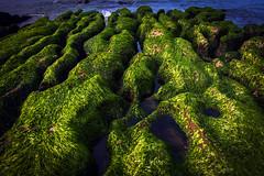 The rocks of Laomei 老梅石槽 (paulpaulpauly) Tags: coast rocks 北海岸 north taiwan taipei algae 台北 laomei 老梅石槽 台北,北海岸,