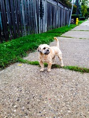 Lost & Found (PEEJ0E) Tags: lookslikerusty fence hydrant fire wandering street lost dog