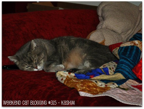 Weekend Cat Blogging #315 - Kashim