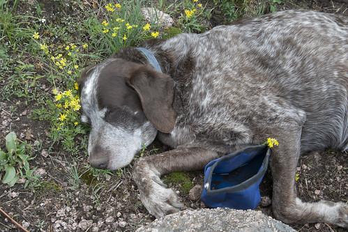 mojo-napping