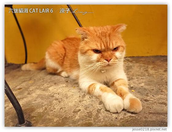 六號貓洞 CAT LAIR 6 8