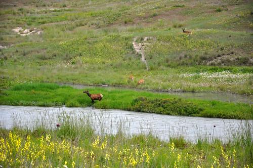 montana july 2011_1892