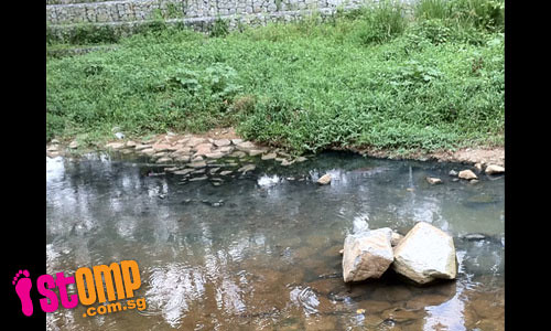 After NEA check, petrol kiosk still leaking sewage into Bishan canal?