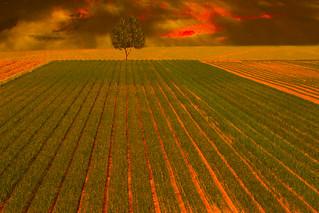Linee dei campi