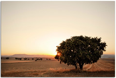 (Antonio Carrillo (Ancalop)) Tags: espaa tree field 35mm canon arbol spain europa europe mark andalucia ii campo 5d lopez antonio almeria carrillo trigo ancalop