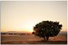 (Antonio Carrillo (Ancalop)) Tags: españa tree field 35mm canon arbol spain europa europe mark andalucia ii campo 5d lopez antonio almeria carrillo trigo ancalop