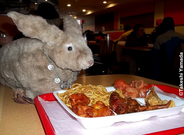 Seara (sea rabbit) curiously sniffing Dr. Takeshi Yamadas lunch at Lunch Box Buffet restaurant in Manhattan, New York on December 28, 2011.  20111228 025