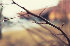 Every teardrop is a waterfall. (Emma Eriksson Photography) Tags: rain canon 50mm spring raindrop 5dmk2
