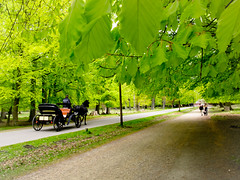 Horsedrawn cab in spring forest (newfilm.dk) Tags: horse carriage dyrehaven klampenborg horsedrawncarriage horsecarriage beechtrees springforest