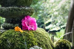 Japanse Tuin Clingendael 2014-02307 (Arie van Tilborg) Tags: japanesegarden denhaag thehague clingendael japansetuin clingendaelestate landgoedclingendael